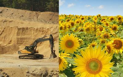 Clay vs. sunflower.